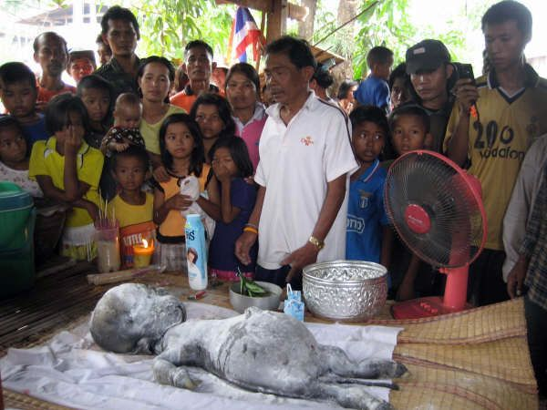 Thailanda: S-a descoperit cea mai ciudată creatură din lume. VEZI cum arată!