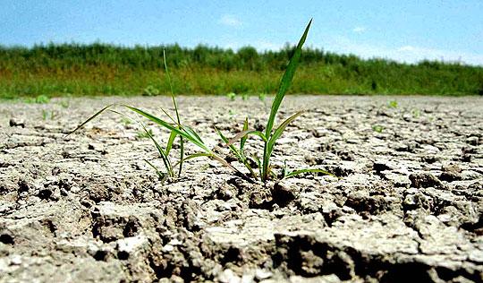 Fermierii afectaţi de secetă primesc ajutor de la Ministerul Agriculturii!