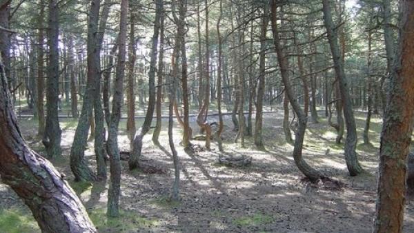 Pădurea Hoia-Baciu, între cele mai bântuite păduri din LUME