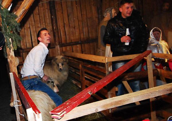 TIMIŞ: Rodeo pe oaie! Un tânăr beat a încălecat mioara din ieslea Mântuitorului