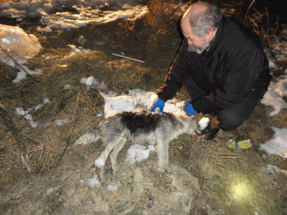 Cruzime fără margini. Trei câini comunitari găsiţi otrăviţi în prima zi a anului