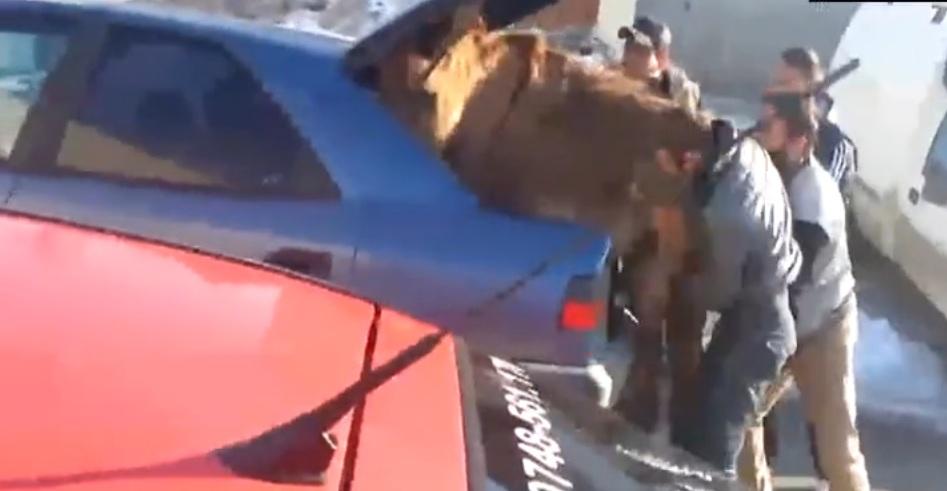 VIDEO Cu măgarul în portbagaj. Primul clip din 2013 care va ajunge viral în toată lumea