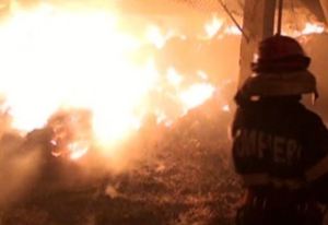 O ferma de pasari din Campia Turzii a ars aproape in intregime azi noapte