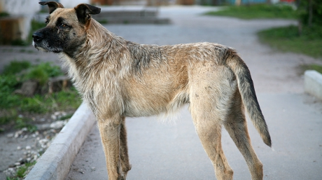 Amenzi de pana la 5.000 de lei pentru persoanele care hrănesc câini fără stăpân