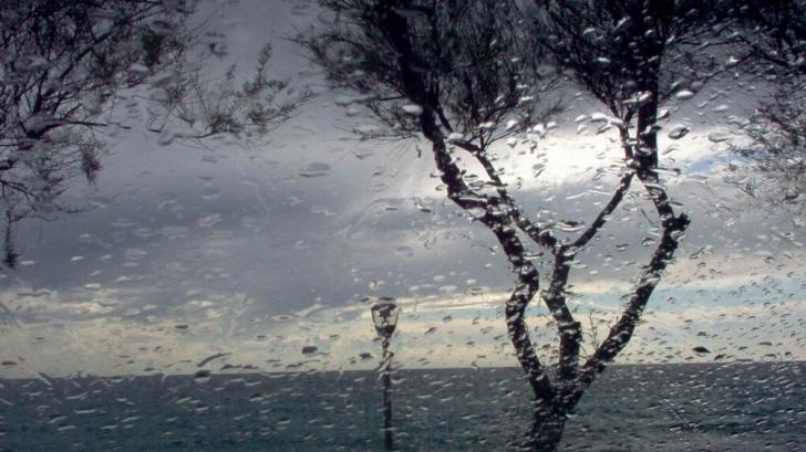cod galben ploi