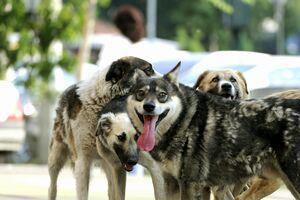 CCR: Legea câinilor comunitari, declarată constituțională