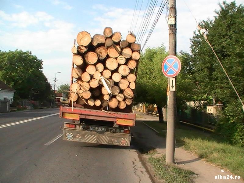 Mafia lemnului! Poliţiştii clujeni au confiscat o cantitate impresionantă de lemne în doua zile