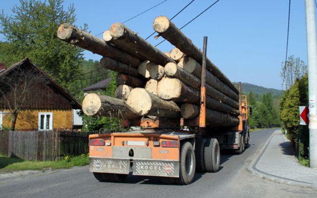 Material lemnos confiscat de polițiștii clujeni în valoare de 4.800 lei