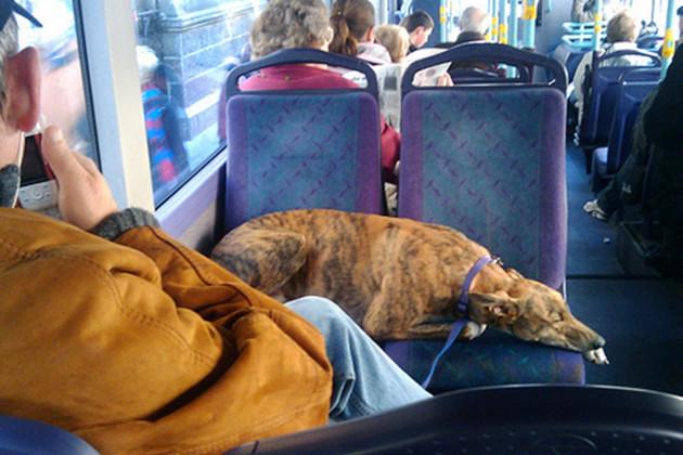 caine autobuz