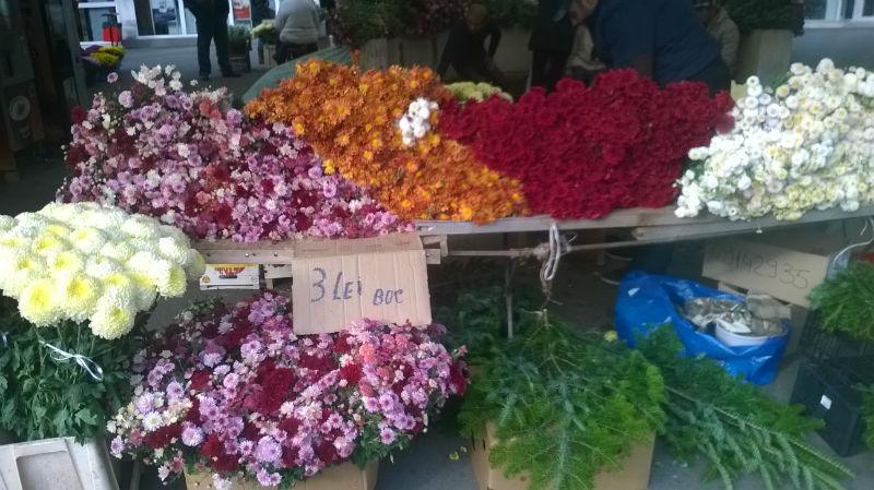 flori luminatie 2015 cluj