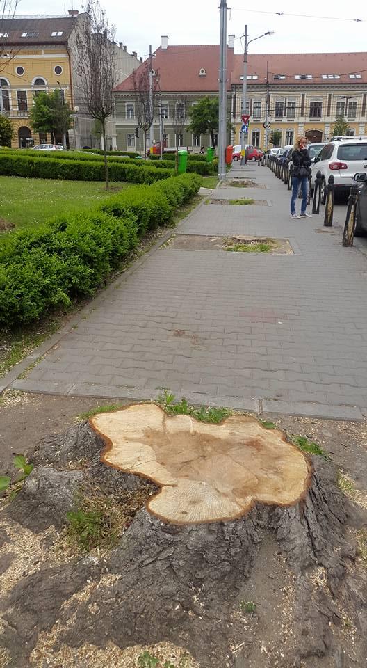 copaci taiati piata avram iancu cluj latura estica