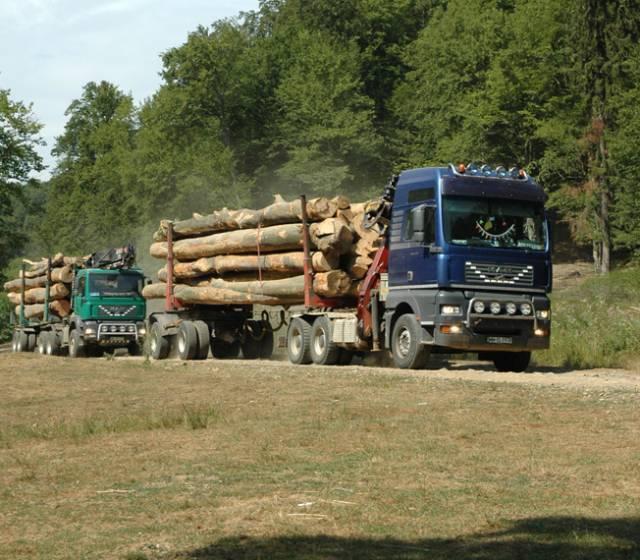 Jaful Romaniei continua! Profit de 5 miliarde de euro obtinut din defrișări ilegale!