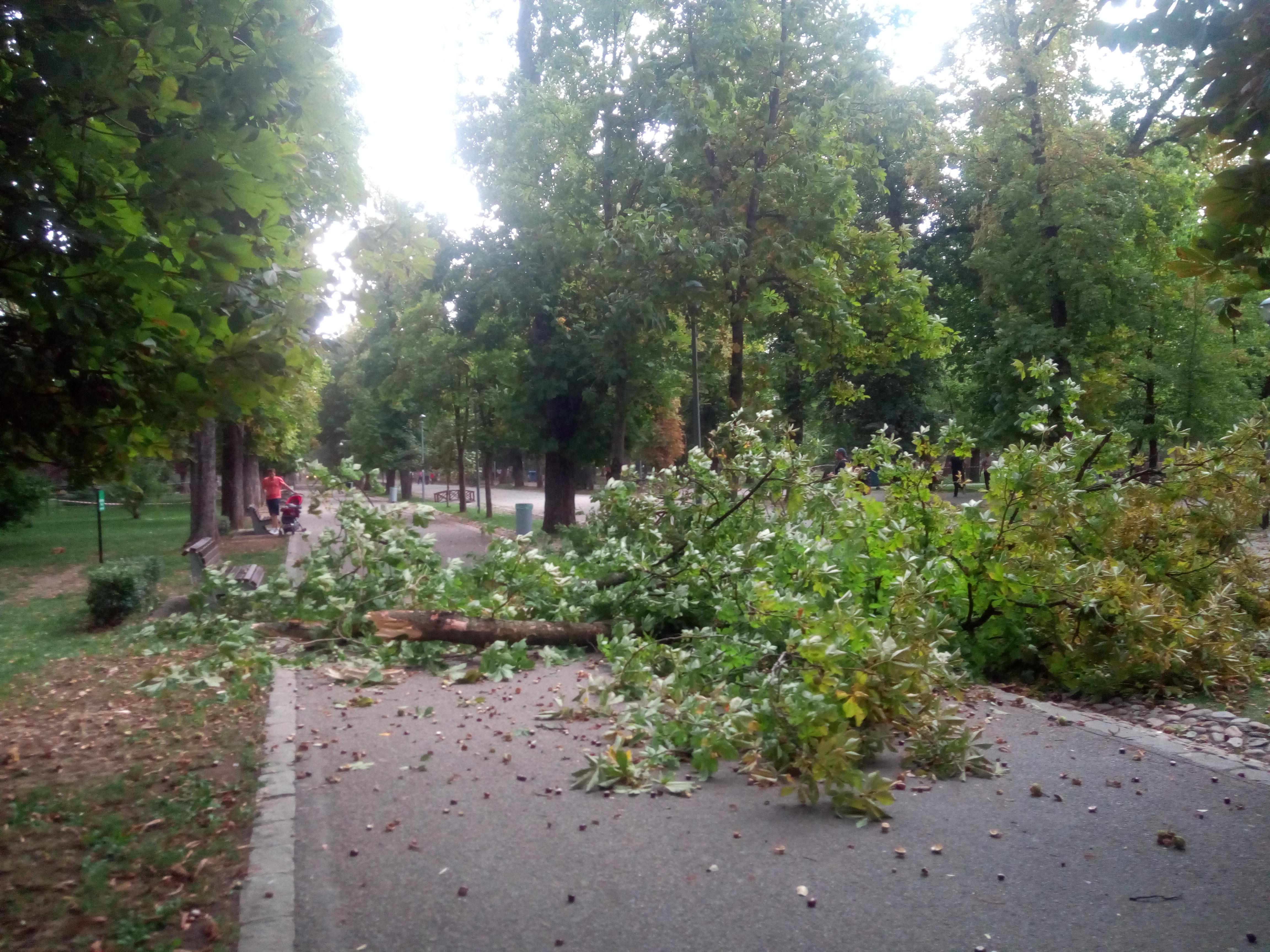 Prăpăd în Parcul Central după furtuna din această după-amiază – FOTO