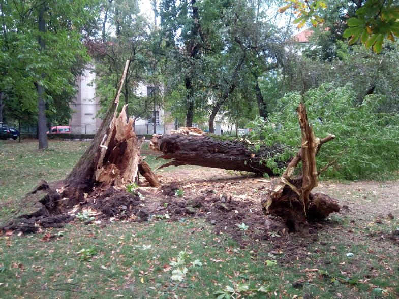 Furtuna violentă de duminică a distrus Parcul Central şi a lăsat fără curent mai multe cartiere – FOTO