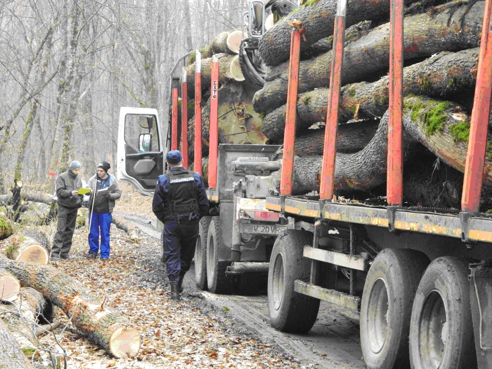 Polițiștii clujeni au confiscat lemne tăiate ilegal în valoare de peste 45.000 lei