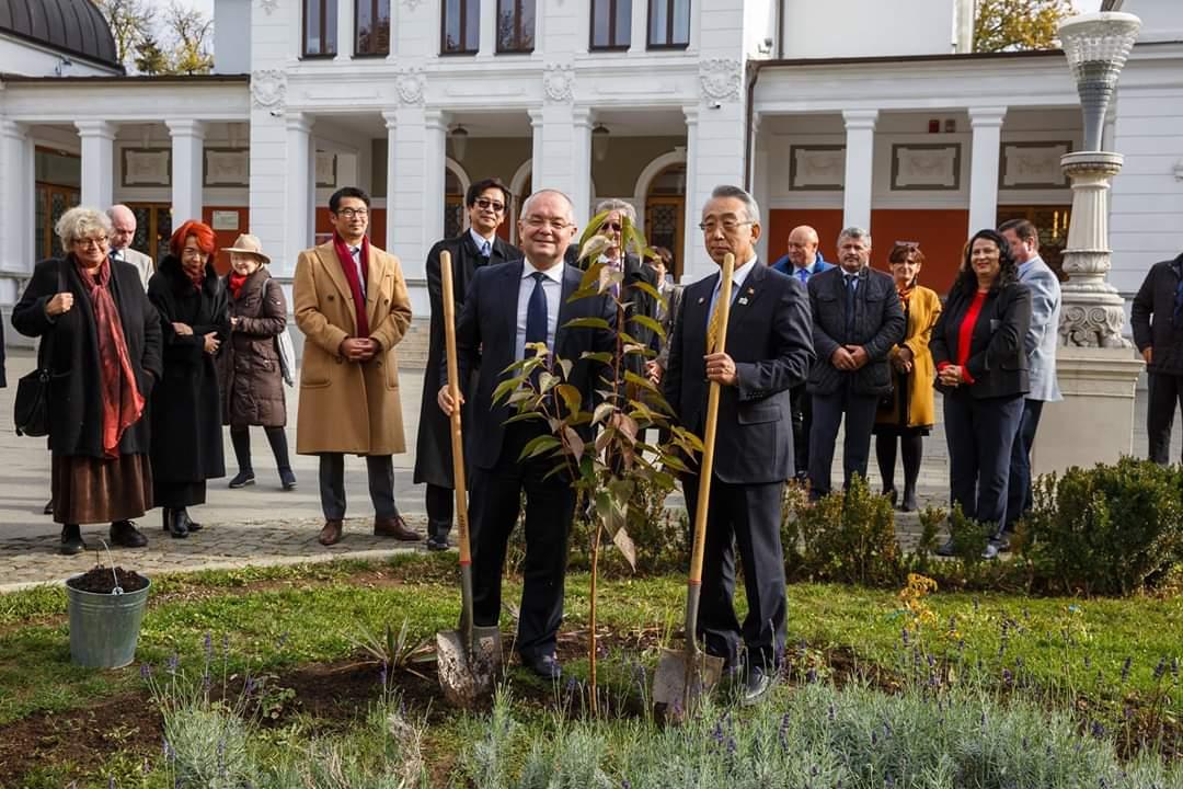 100 de cireși japonezi vor fi primiți de municipiul Cluj-Napoca din partea unei asociații din orașul Matsuyama, Japonia! Unul a fost plantat deja în Parcul Central!