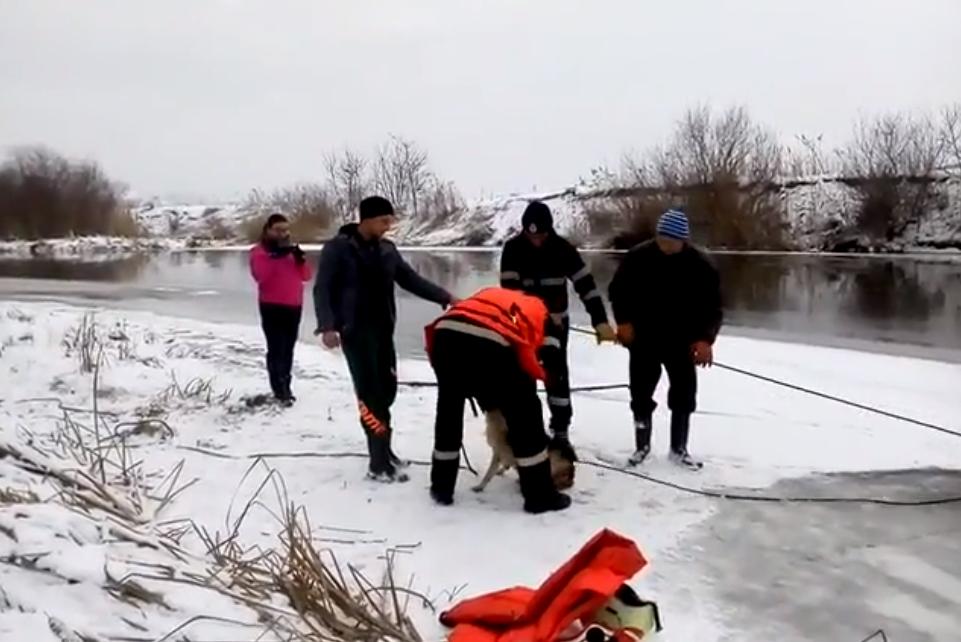 Un cățel a fost salvat din albia Someșului înghețat de pompierii din Dej! VIDEO
