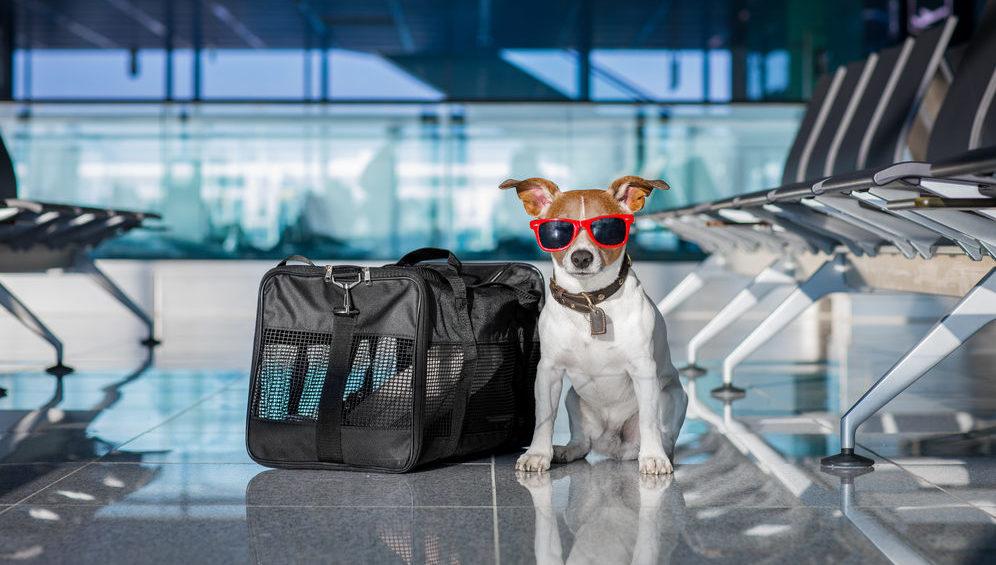 Vii cu avionul la Cluj? Îți poți aduce și animalul de companie cu tine