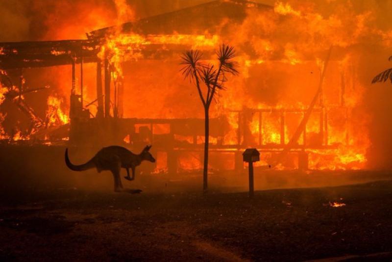 Dezastru în Australia. 23 de morți și peste 500 de milioane de animale moarte din cauza incendiilor