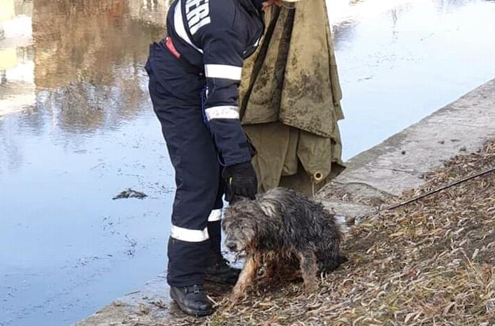 Câine căzut în Someș, salvat de pompierii clujeni – FOTO