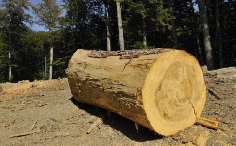 Hoții de lemne nu stau acasă! Doi minori și un bărbat au fost prinși după ce au tăiat ilegal patru arbori
