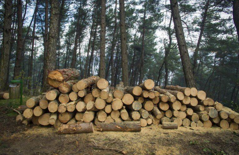 Aproximativ 100 de dosare penale într-o singură săptămână, pentru infracţiuni în domeniul silvic