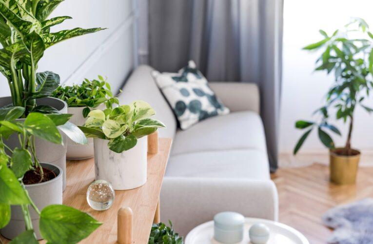 Ghiveci vs. terariu – PRO si CONTRA Care e cea mai buna alegere pentru locuinta ta?