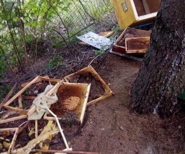 În căutare de hrană, un urs a dat iama într-o stupină din Casele Micești! Atenție sporită pentru excursioniști!