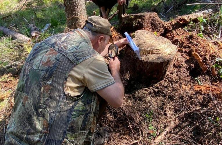 Controale efectuate de Garda Forestieră Cluj în bazinul Someșului Rece din Munții Apuseni, unde senatorul Mihai Goțiu a semnalat tăieri ilegale de pădure
