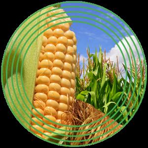 USAMV Cluj-Napoca, singura universitate din Europa Centrală și de Est, parteneră în Proiectul Orizont 2020 CroopBooster-P, despre viitorul culturilor agricole din Europa