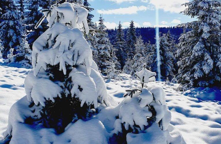 Iarna și-a intrat în drepturi la MĂRIȘEL: zăpadă uriașă și peisaje de poveste – FOTO