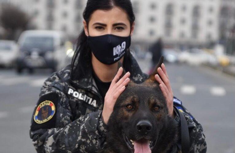 MAI le solicită românilor să nu folosească petarde de Anul Nou: Pentru animale este un coșmar
